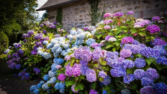 PA and DE Garden Maintenance with Care