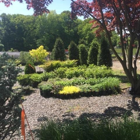 Our goal is to provide you with distinctive specimens and ornamentals that not everyone on the block will have