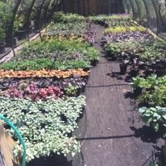Cider Mill Landscapes Nursery