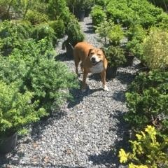 Even our canine consultant, Boose, enjoys the blooms at the nursery!