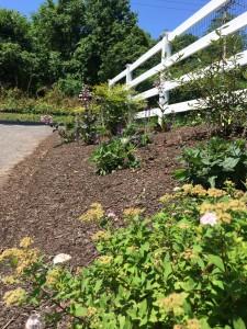 Glen Mills PA landscape design